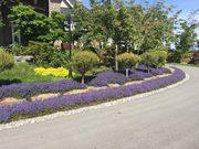 Best Chilliwack Lawn Maintenance Service