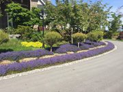 Get The Reliable Abbotsford Strata Maintenance | Transformations Lands